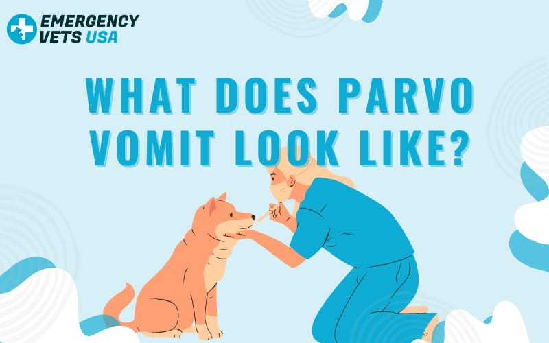 What Does Parvovirus Vomit Look Like