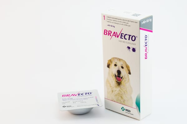 How Long Do Bravecto Side Effects Last? Flea & Tick Medication