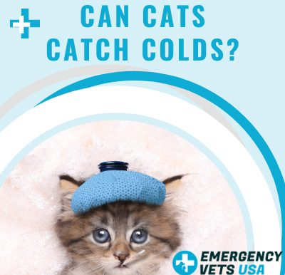 Do Cats Catch Colds