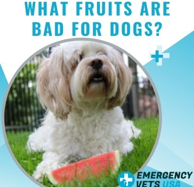 Fruits That Are Bad For Dogs
