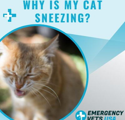 My Cat Is Sneezing A Lot