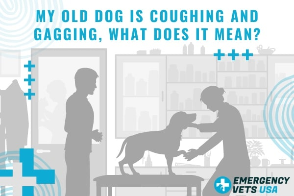 My Old Dog Is Coughing And Gagging, What Does It Mean