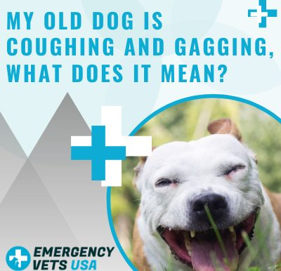 Old Dog Is Coughing And Gagging