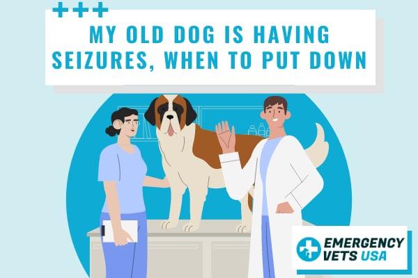 Old Dog Is Having Seizures
