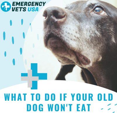 Old Dog Won't Eat