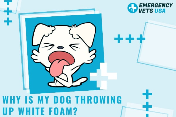 Why Is My Dog Throwing Up White Foam