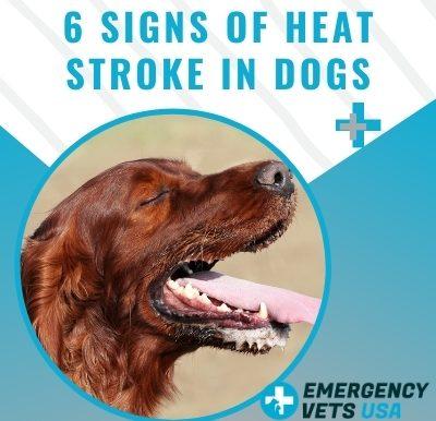 6 Signs Of Heat Stroke In Dogs