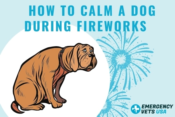 How To Calms A Dog During Fireworks