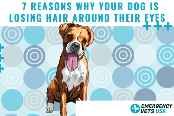 Reasons Why Your Dog Is Losing Hair Around Their Eyes