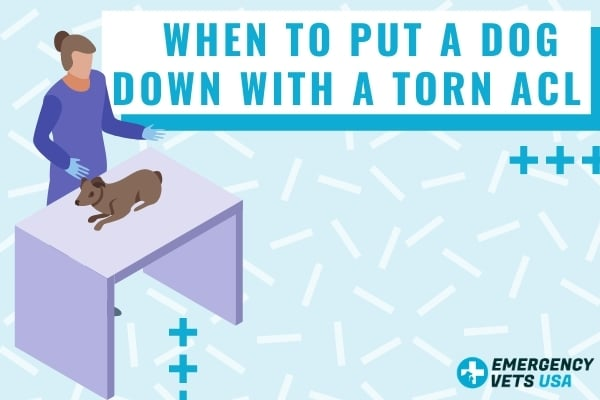 When To Euthanize A Dog Down With A Torn ACL