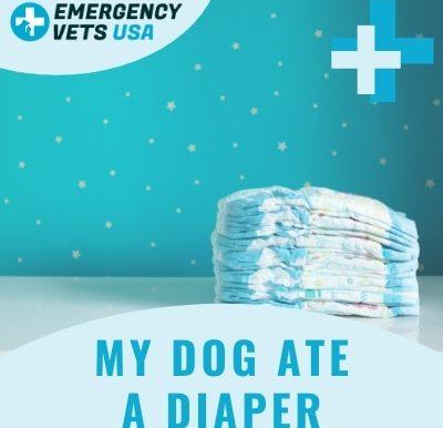 Dog Ate A Diaper