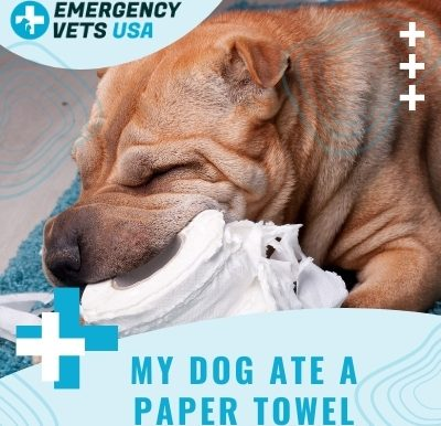 Dog Ate A Paper Towel