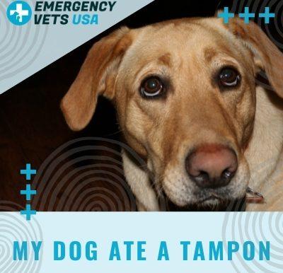 Dog Ate A Tampon