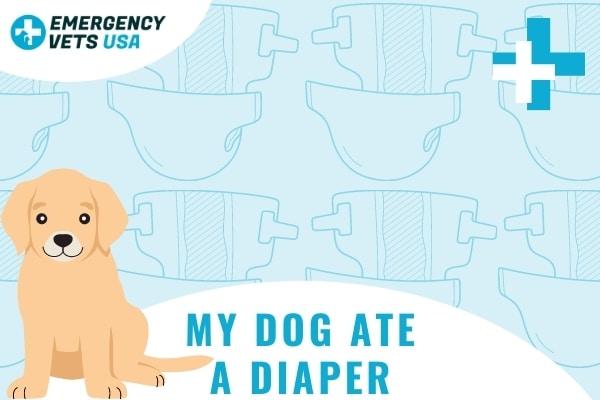 My Dog Ate A Diaper