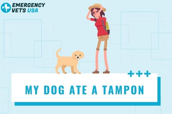 My Dog Ate A Tampon