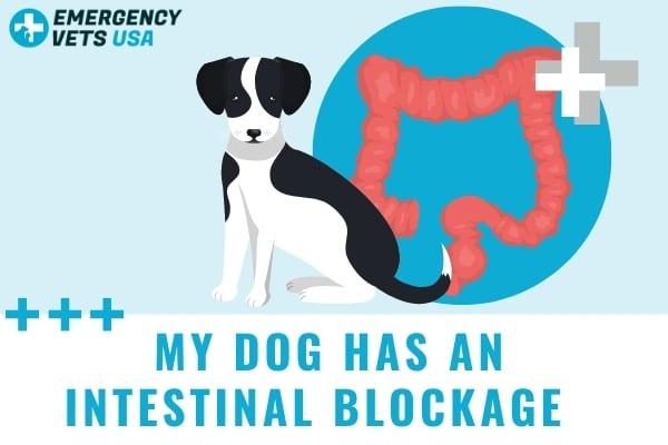 My Dog Has An Intestinal Blockage