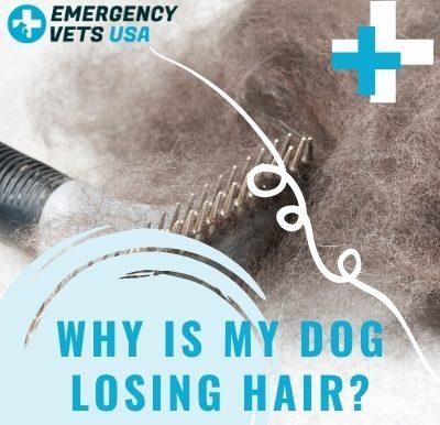 My dog is losing hair