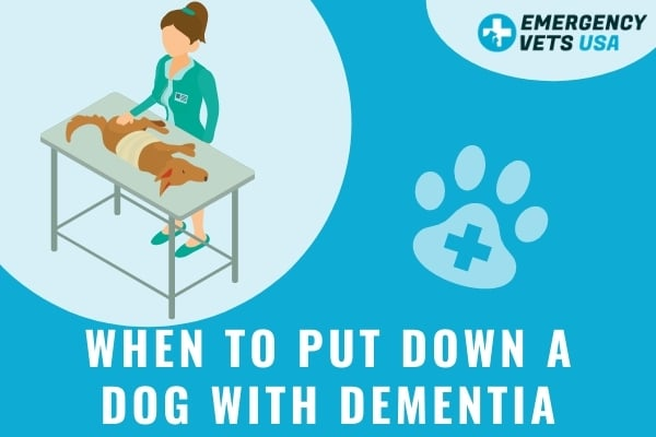 When To Put Down A Dog With Dementia