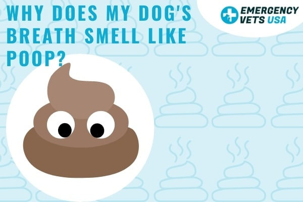 Why Does My Dog's Breath Smell Like Poop