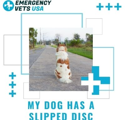 Dog Has A Slipped Disc