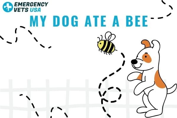 My Dog Ate Bee