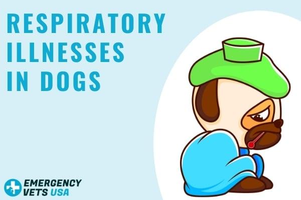 My Dog Has A Respiratory Illness