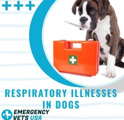 Respiratory Illnesses in Dogs