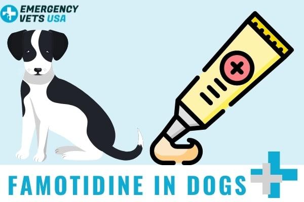 Famotidine In Dogs