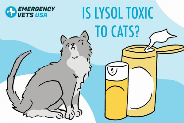 Is Lysol Toxic To Cats