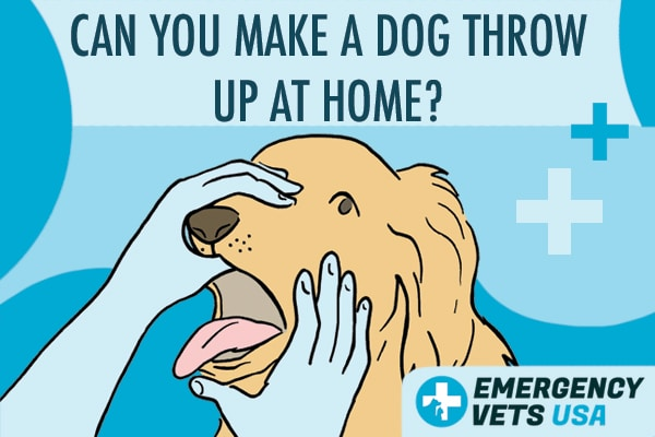Can You Make A Dog Throw Up At Home