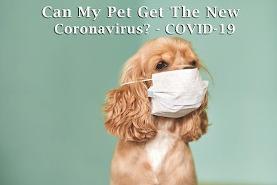 Can My Dog Get Coronavirus