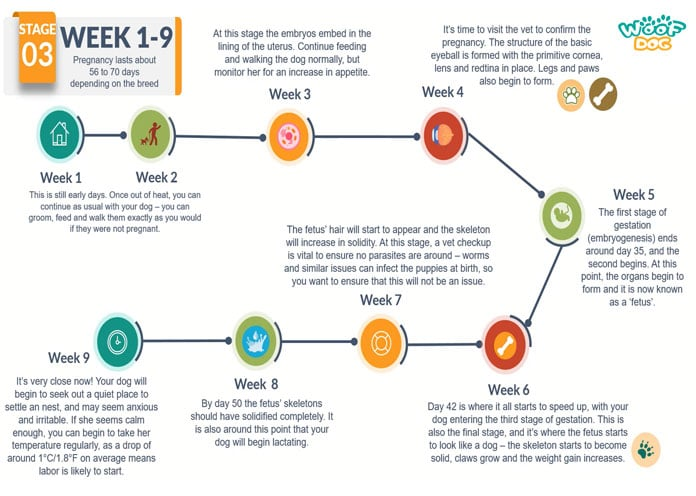 Dog Pregnancy Week by Week Calendar